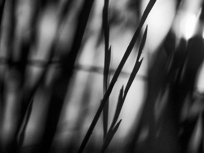 Nature Blackandwhite Dark Black And White Light And Shadow