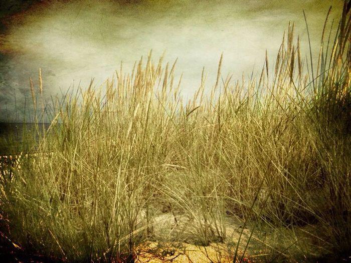 Heidkate Strand Dünenlandschaft