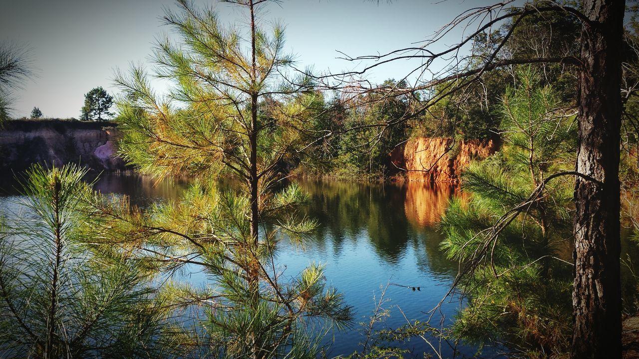 Pine Trees At Lakeshore