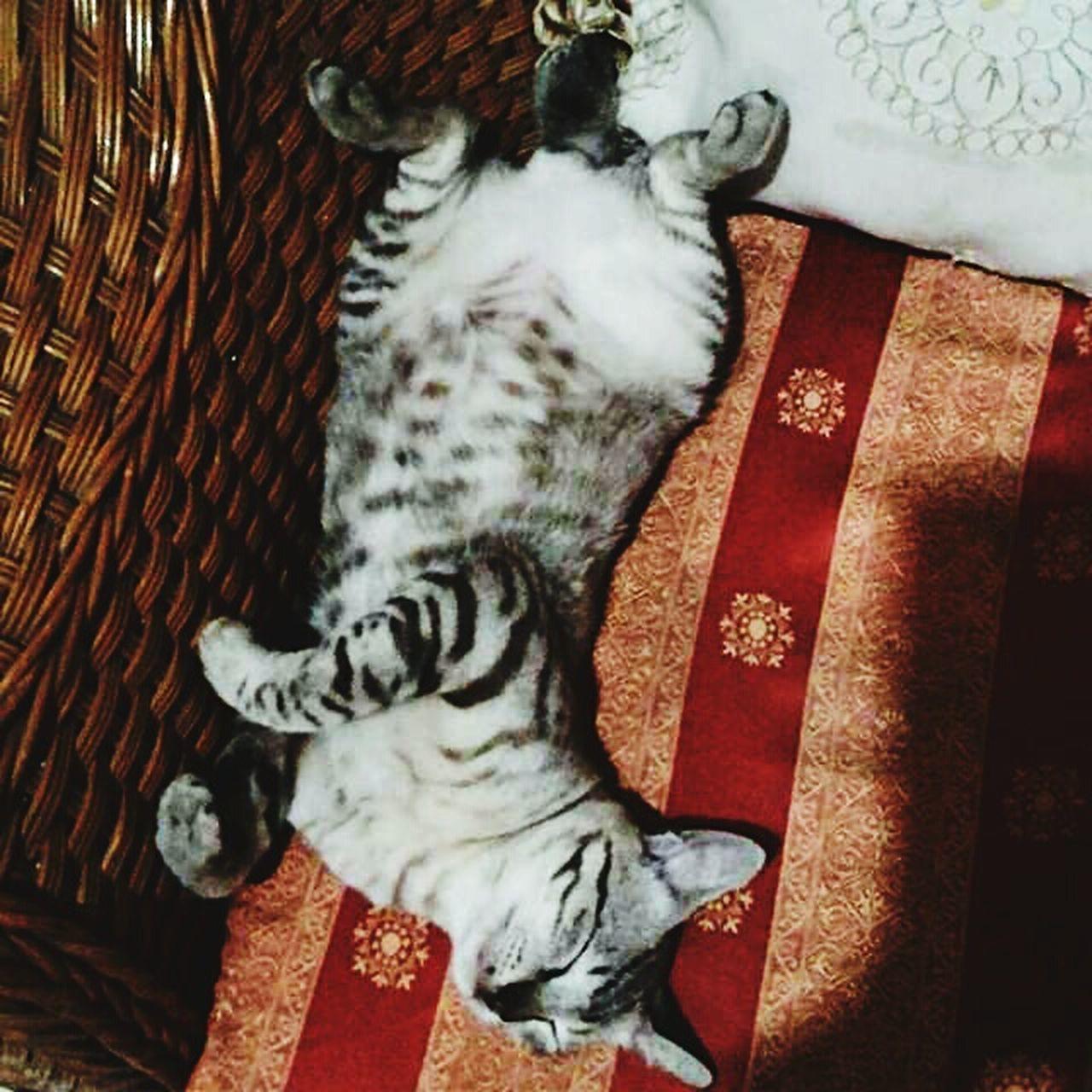Cute Cats (>^ω^<) Weird Sleep Position Animal Photography