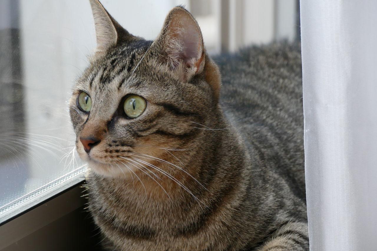 Beautiful stock photos of katzen, Animal Themes, Cat, Close-Up, Day