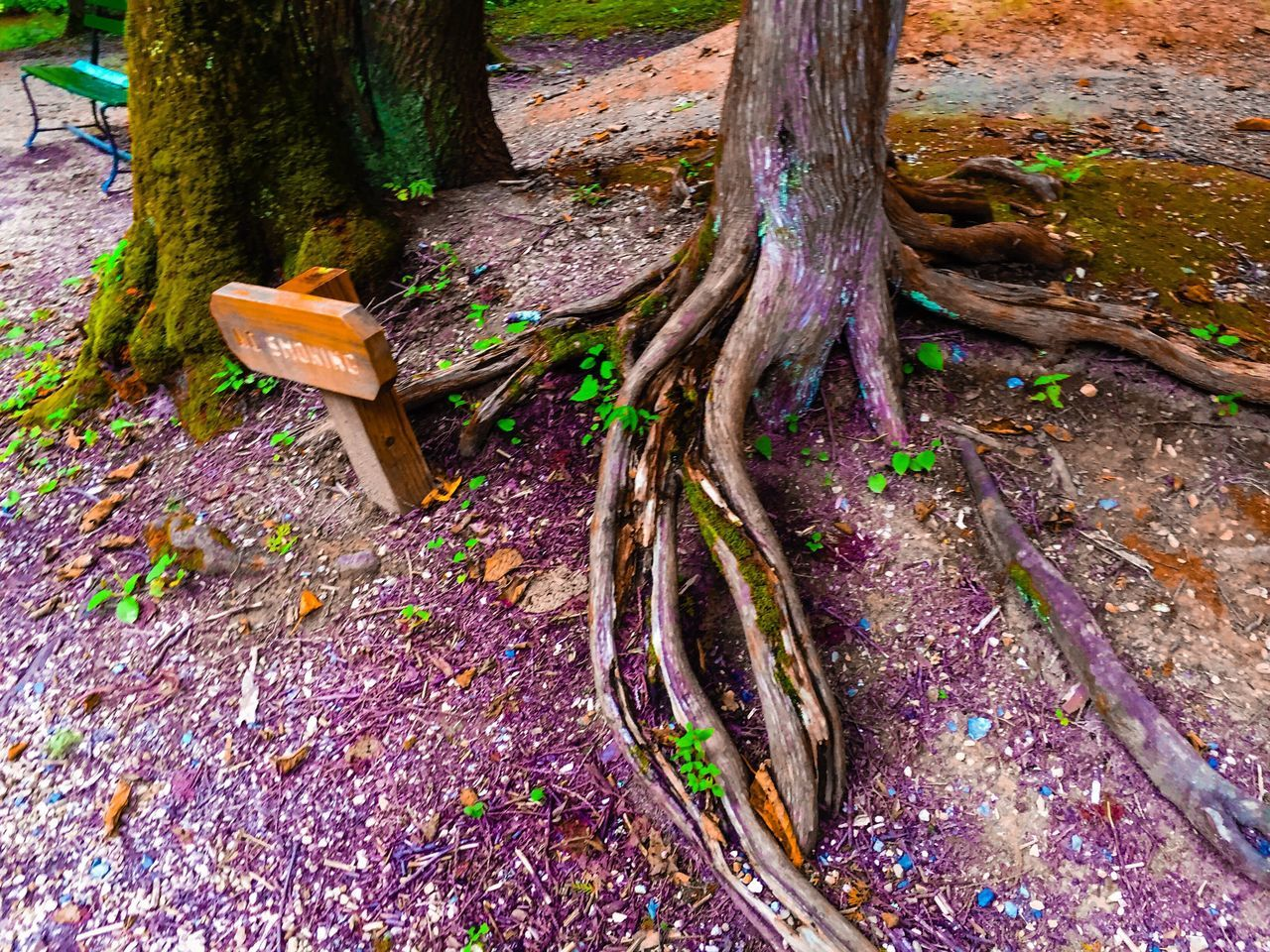 Tree Roots  Sprigs Greenary Nature Textures Taking Photos Bench In The Woods Purple And Green Bgbphotos