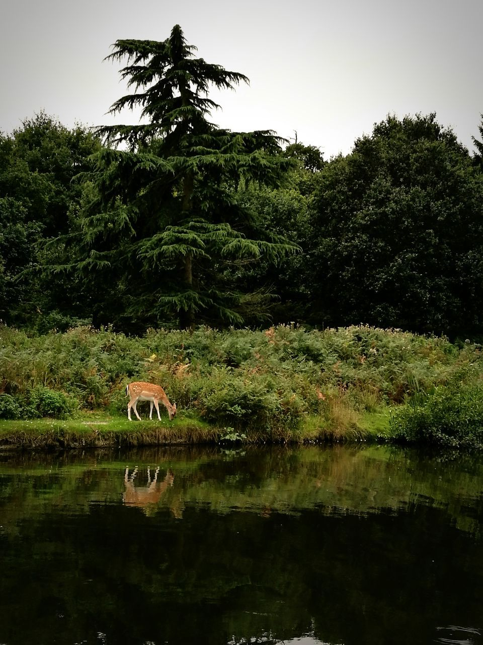 tree, nature, reflection, growth, animal themes, water, day, no people, outdoors, lake, one animal, plant, animals in the wild, beauty in nature, mammal, bird, sky