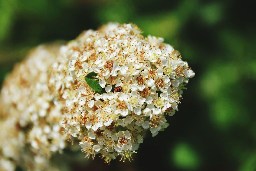 Samsun çiçek Flower