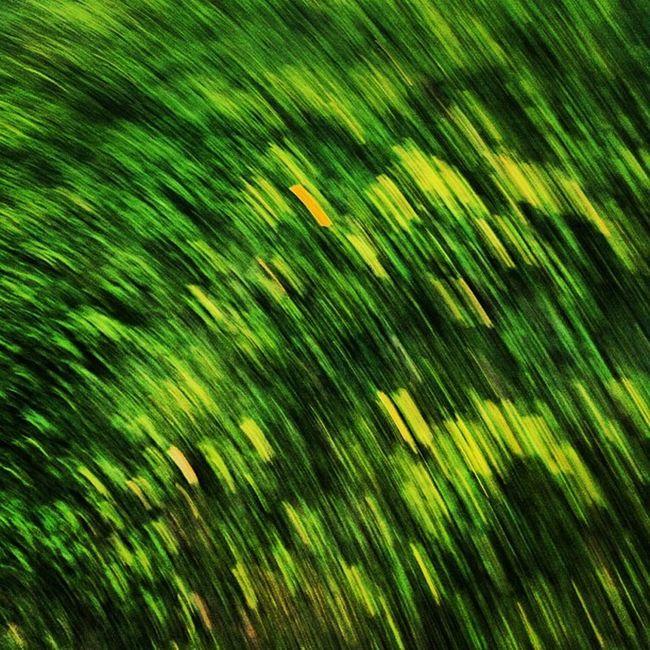 Capturing grass while walking around the lake