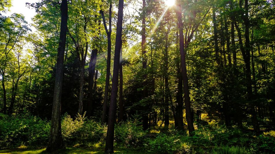 Allegheny National Forest Sun Forest Canon