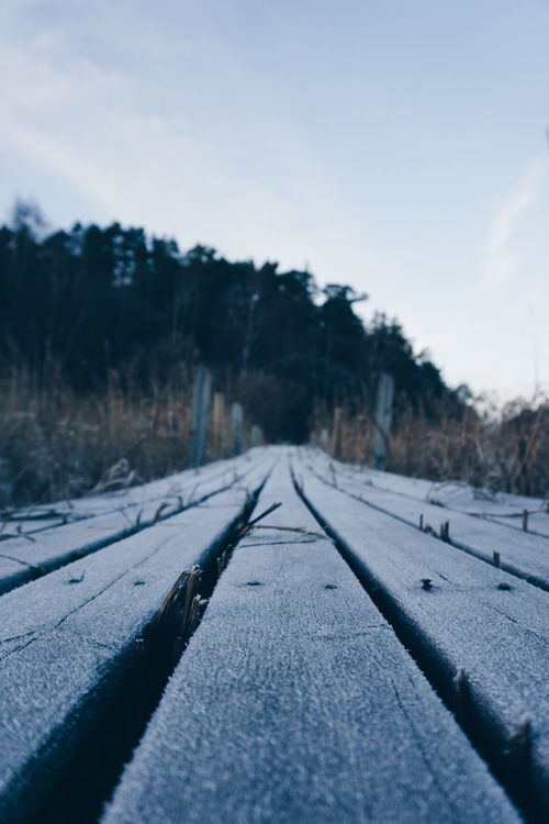 Cold Temperature Winter Snow The Way Forward Nature Tree Transportation Outdoors No People Day Tire Track Beauty In Nature Sky Landscape Scenics Sweden Dynekilen Tree Close-up Track Way Forward