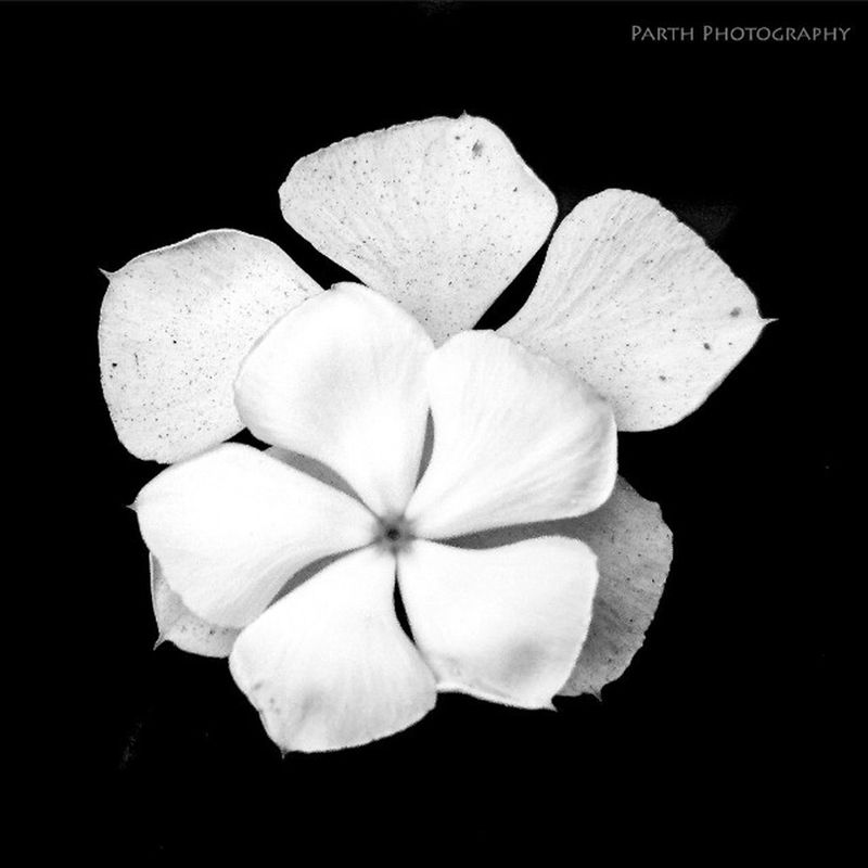 Parththakkarphotography Instagood Instalove Blackandwhitephotography Neture Flower B /W Suratcity Instapic Follow4follow Like4like Followme Followback