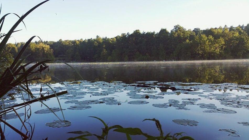 Lake Sundbyberg Morning