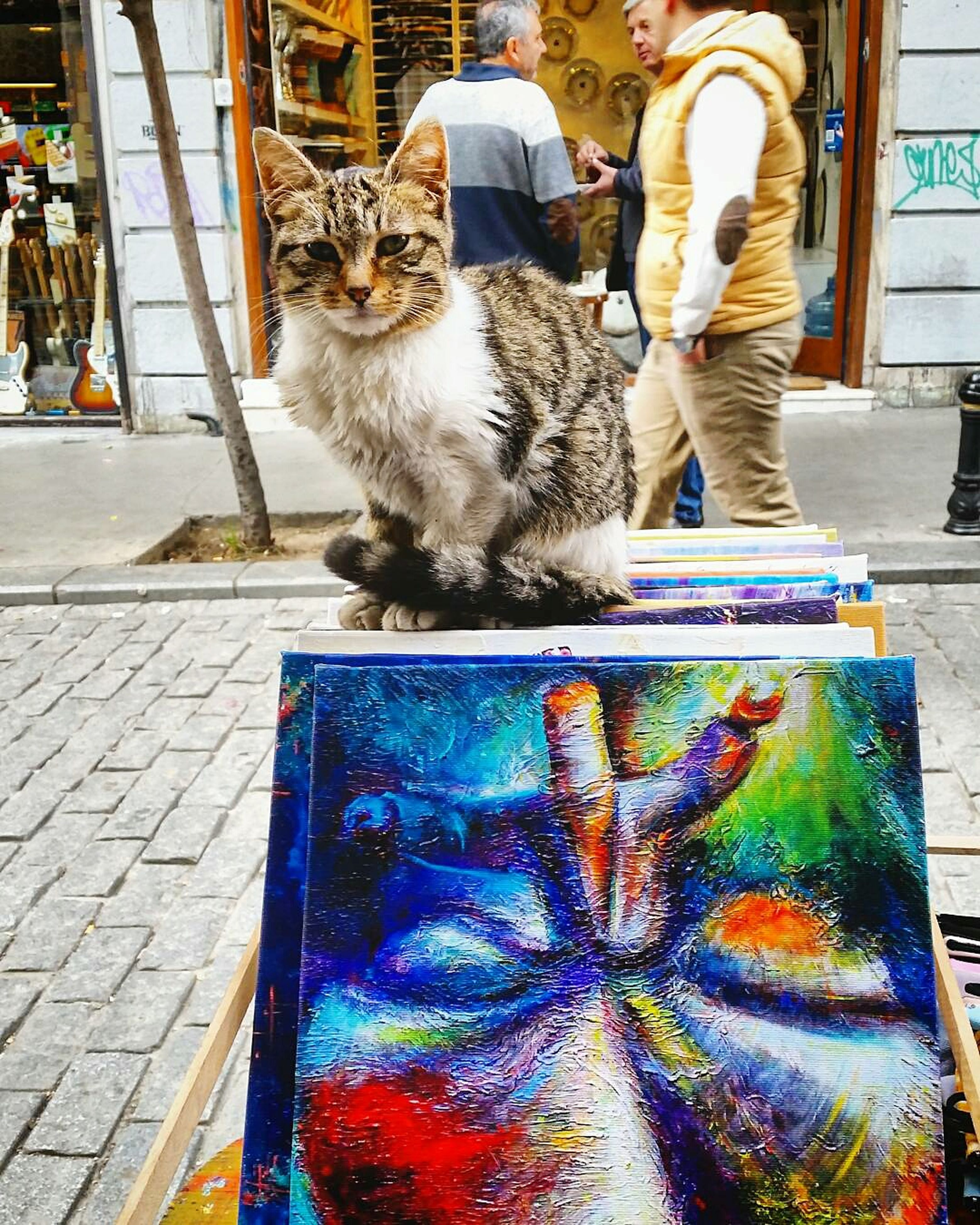 pets, mammal, domestic animals, domestic cat, animal themes, one animal, one person, feline, day, outdoors, adult, people, adults only