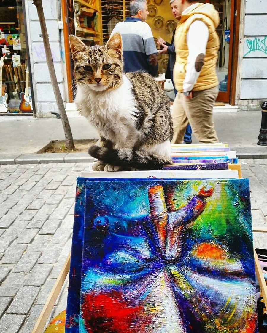 Artiseverything Art, Drawing, Creativity Domestic Cat Looking At Camera Feline Outdoors Multi Colored Art Is Everywhere Artistic Expression Artistic Photo Pets Arts Culture And Entertainment Artofvisuals Istanbullife Istanbul Istanbulcity Istanbullovers Stree Photography Street Art Exhibition Streetphoto Streetart Street Market Shopping Street Portrait Domestic Animals