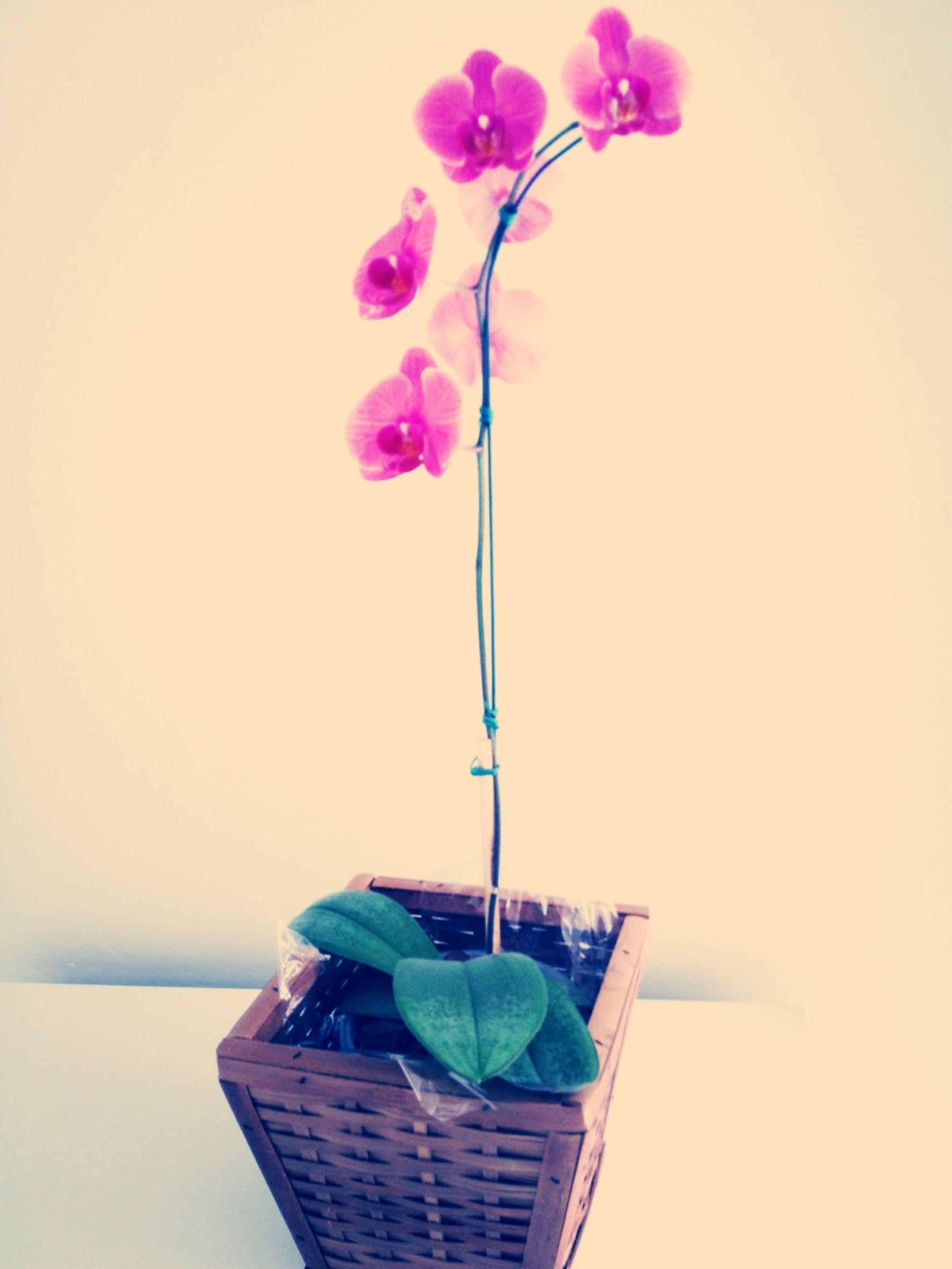 ganhar Flores è Tao Bom, ganhar de quem se ama é melhor ainda. Te amo Jorge Castro.