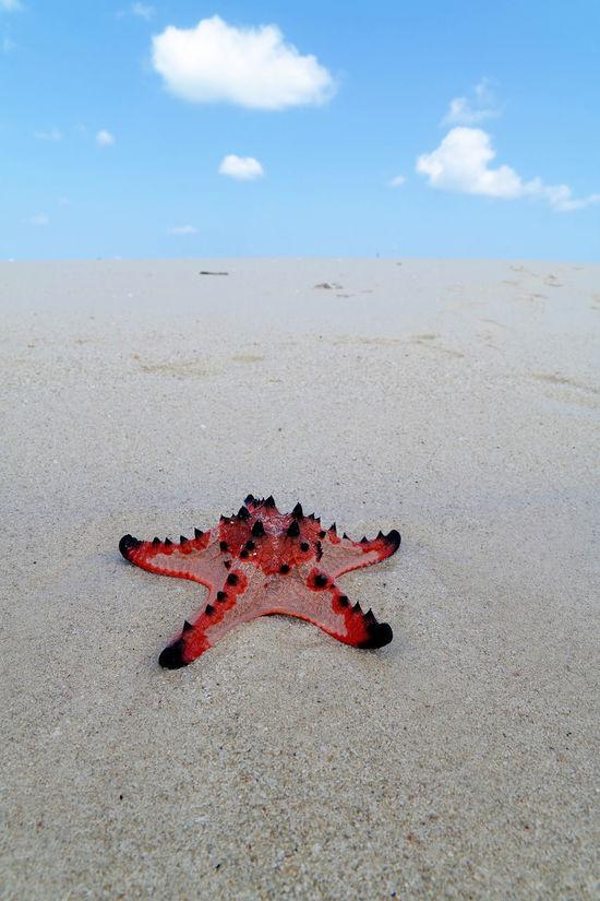 Belitung Island, Indonesia Beach Beach Life Beach Photography Beachphotography Beauty In Nature Blue Sky Cloud Cloud - Sky Day Nature No People Outdoors Sand Sandy Beach Sea Shore Sky Star Fish Starfish  Summer Beach Water