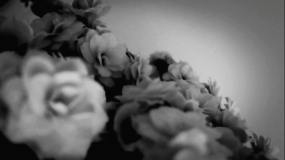 Nature Day Monday Flowers 🌸🌸🌸 Blackandgray April 2017 Daytwentyfour