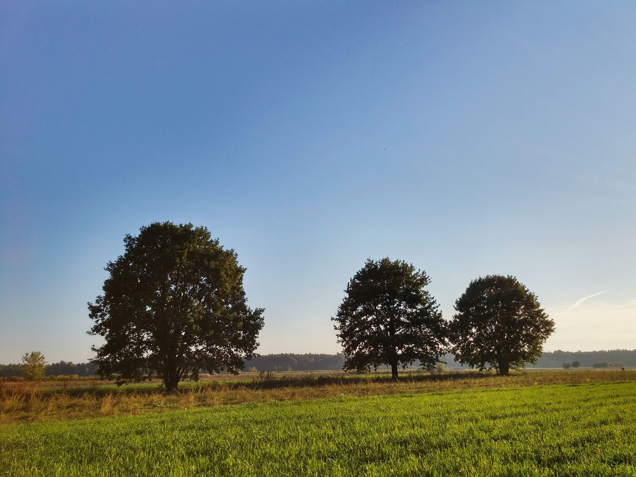 Trees And Grass On Field Against Blue Sky