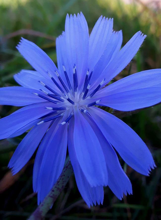 Color Palette Chicory True Blue