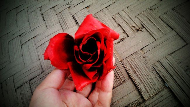 Red Rose 🌹 Flowers As Beauty... That  Is What I Like....