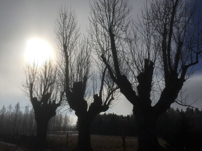 Trees Taking Photos Winter Countryside Shadows & Lights Tree And Sky Check This Out Peace And Quiet