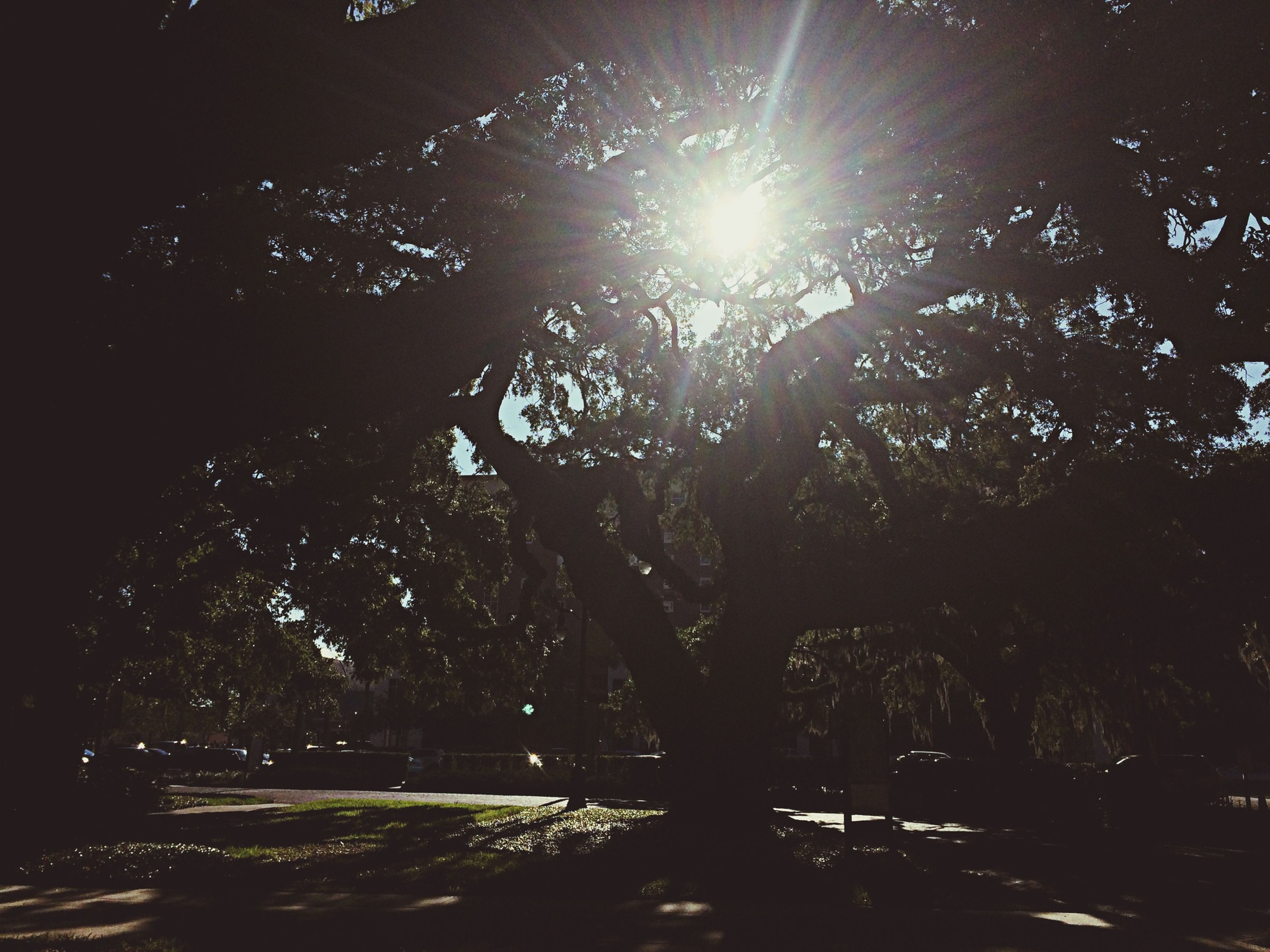 tree, sunlight, growth, sun, branch, silhouette, nature, tranquility, beauty in nature, sunbeam, lens flare, night, outdoors, low angle view, tranquil scene, sky, scenics, no people, water