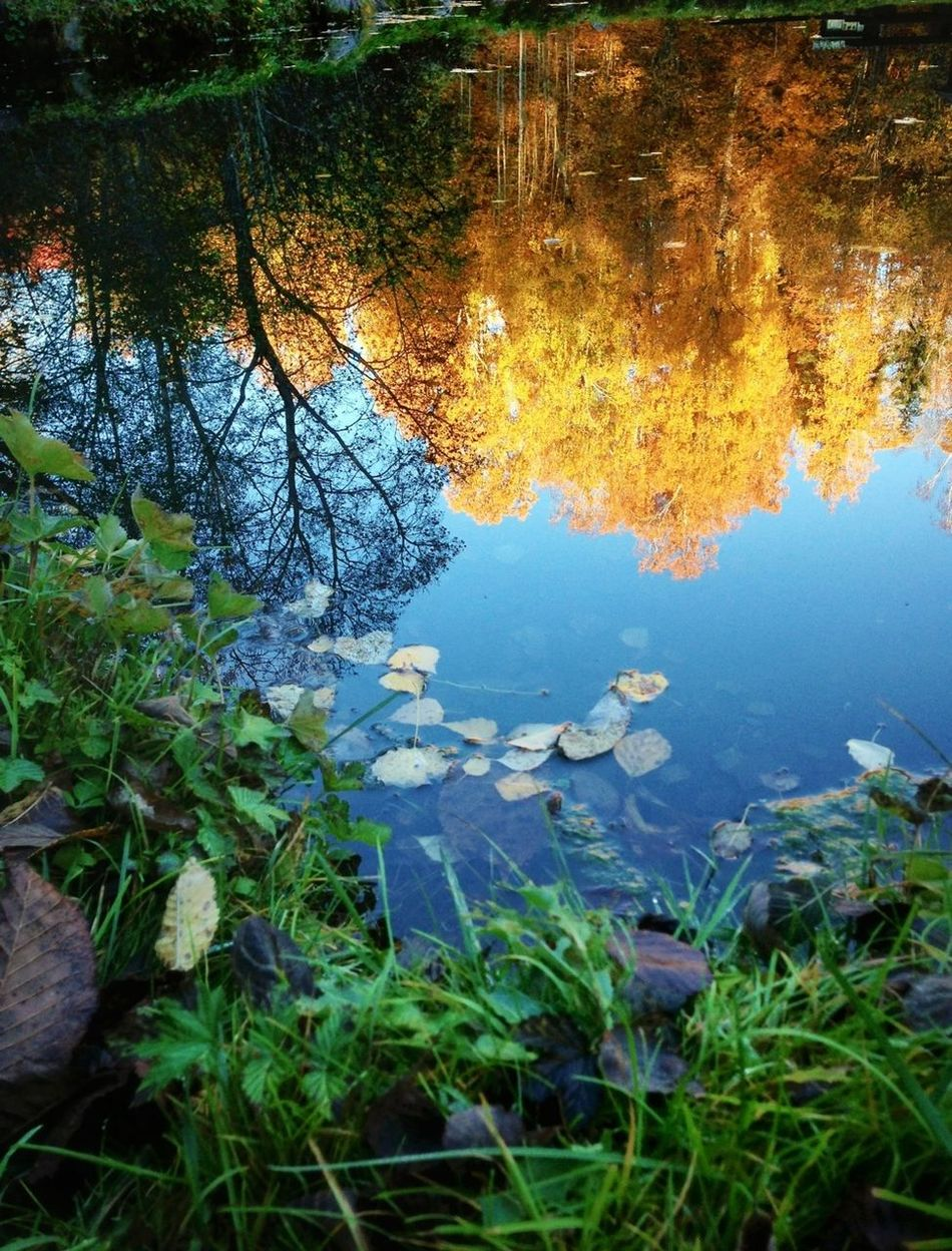REye4reflections Eye4nature eflection! Autumn Nature_collection