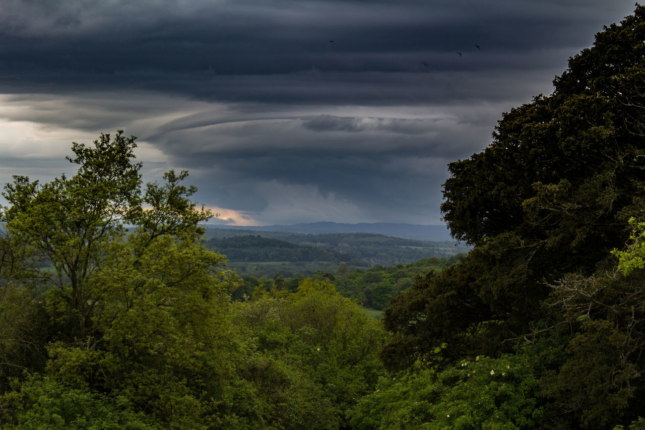 Cloud Cloud - Sky Cloud Formations Cloudy Landscape Lush Foliage Outdoors Overcast Scenics Sky Storm Stormy Stormy Weather Tree Weather Newlands Corner Guildford