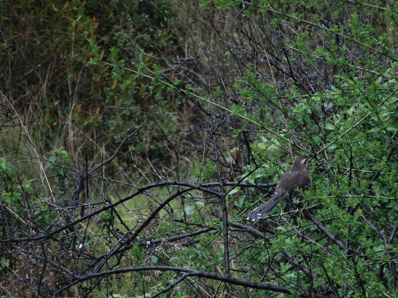 animals in the wild, tree, one animal, nature, animal themes, bird, animal wildlife, no people, day, branch, outdoors, growth, forest, perching