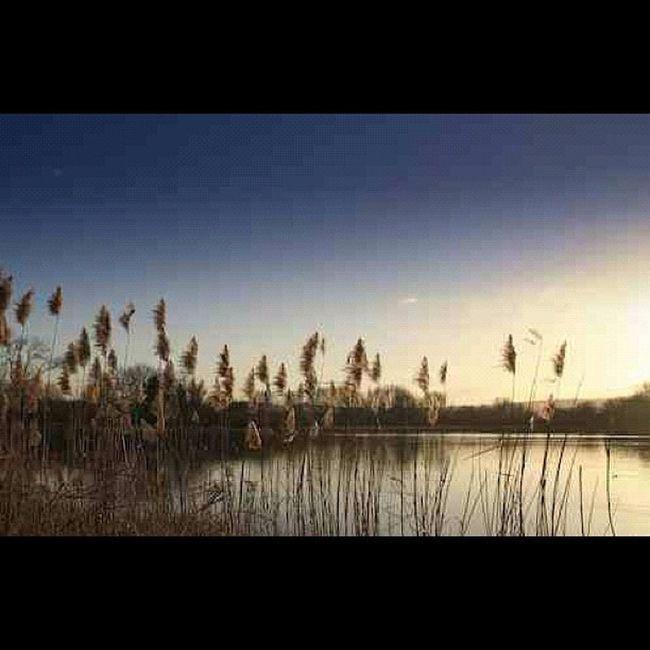 #sunset #sun #bedsigers #uk_igers #instagood #iphoneonly #lake Sun Sunset Lake Iphoneonly Instagood Bedsigers Uk_igers