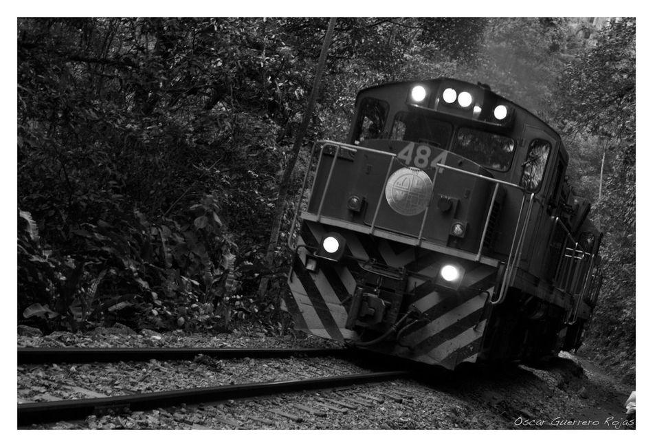 Viajando en Perú Peru Train Perutravel Machu Picchu Blackandwhite Black And White Black & White Light And Shadow Light Train Tracks Plants Traveling Trip Fotografosmexicanos Mexico