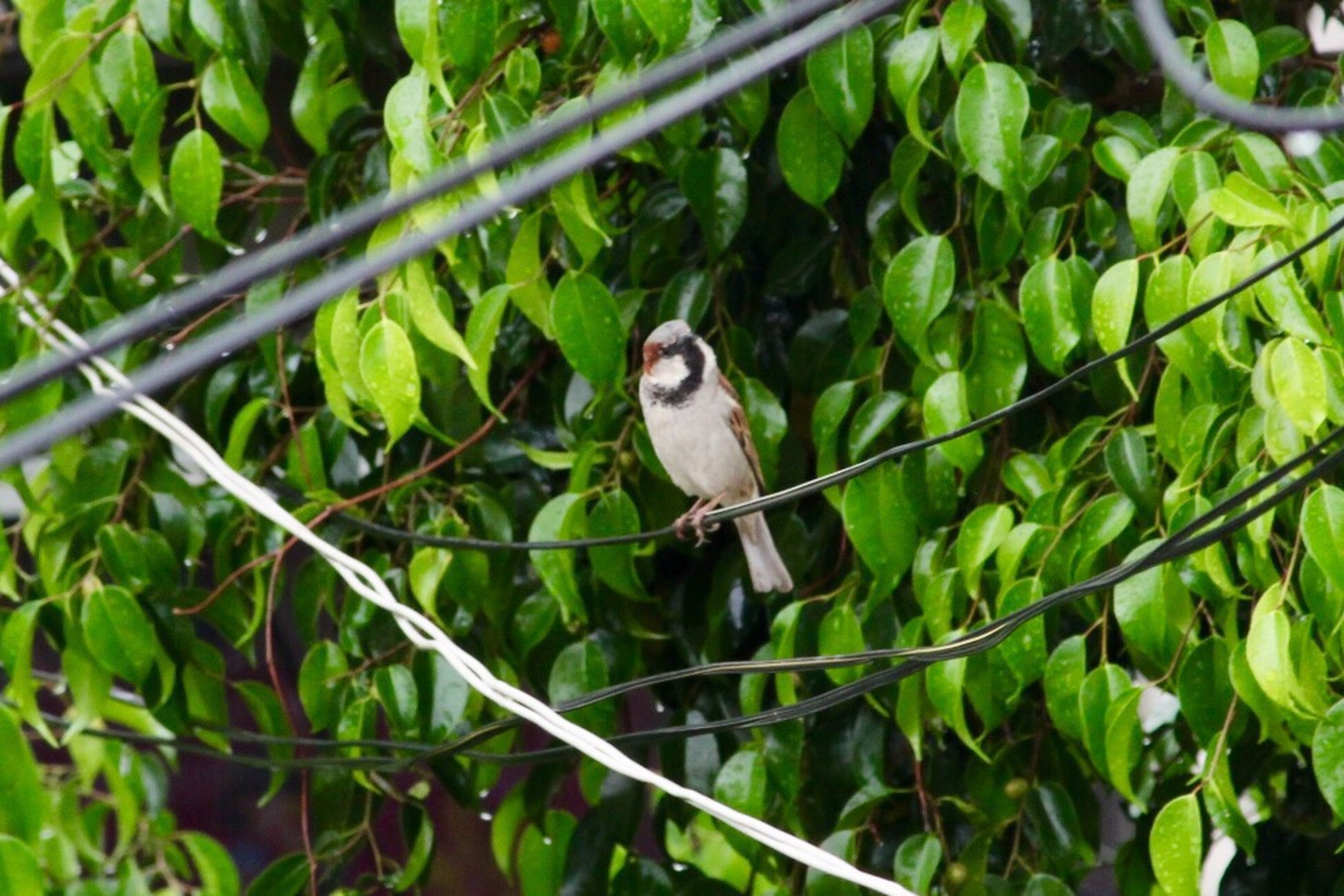 one animal, animal themes, bird, animals in the wild, leaf, perching, growth, green color, animal wildlife, outdoors, plant, nature, tree, branch, day, focus on foreground, no people, full length, beauty in nature, close-up, mammal