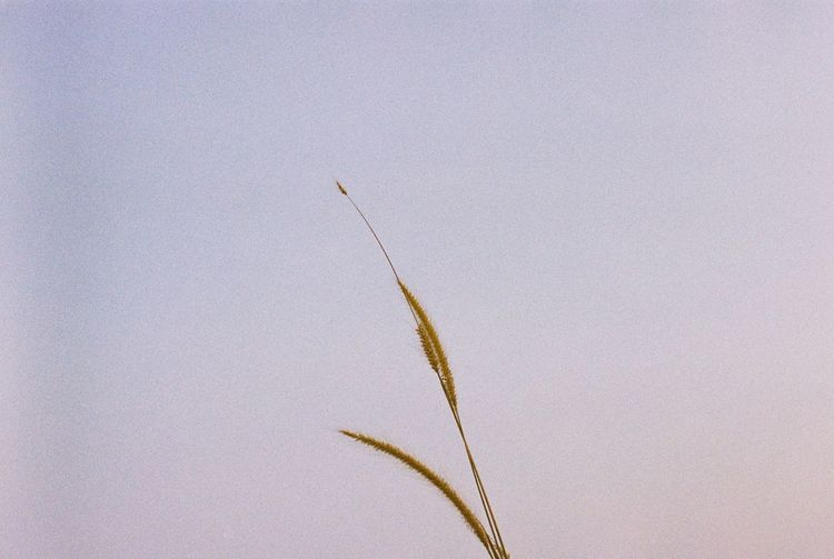 Taken with film camera Bukit Broga Bukit Broga Hill Broga Grass EyeEm Selects Nature No People Close-up Day Growth Outdoors Fragility