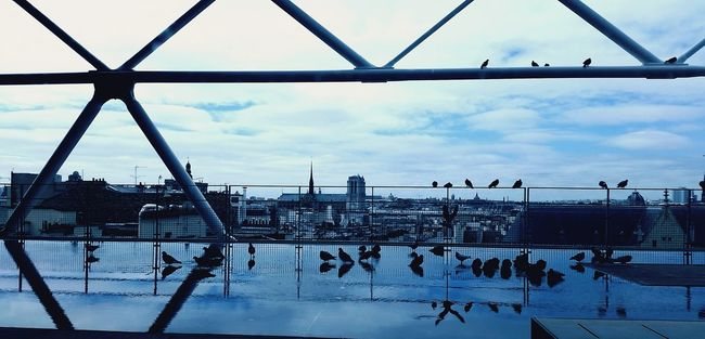 Birds on the blue view | Water Reflections Reflection City Cityscape City Landscape City View  Blue Sky Blue Water Blue Skies Blue City Structure Urban Urban Geometry Urban Reflections Urban Structures Urban Nature Urban Landscape Urban Skyline Urban Structure Steel Blue BLUE STEEL Birds Dark Bird