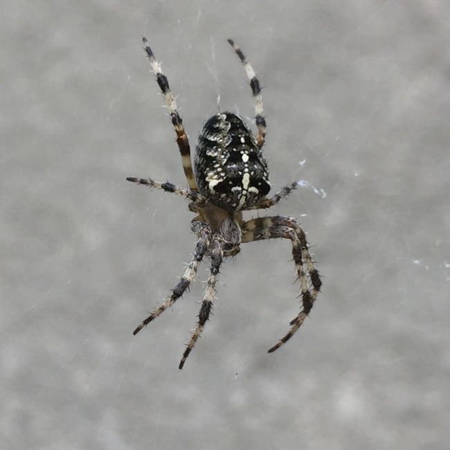The spider Insect Animals In The Wild Spider Wildlife Nature Zoology Common Popular White