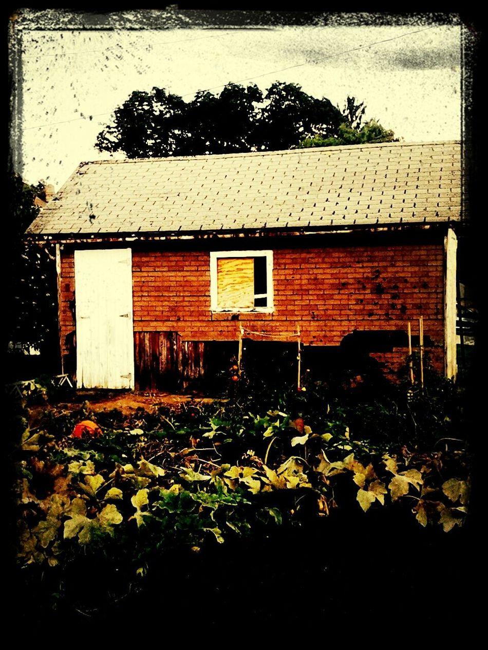 Beauty Of Decay ....... My Neighborhood