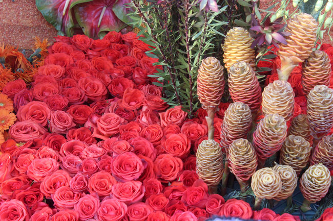 Close-up Collection Flower Flower Head Freshness Multi Colored Red Rose - Flower Rose Parade Float