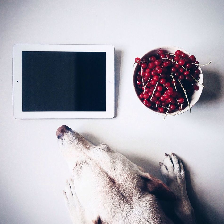 Beautiful stock photos of internet, Animal Body Part, Animal Head, Animal Themes, Bowl