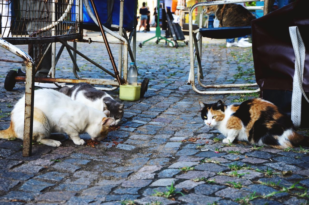 Streetphotography Open Edit Cats