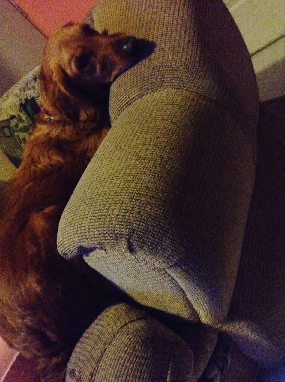 Relaxing Zaashila Cute Pets LaMejorPerra I Love My Dog Lamejor