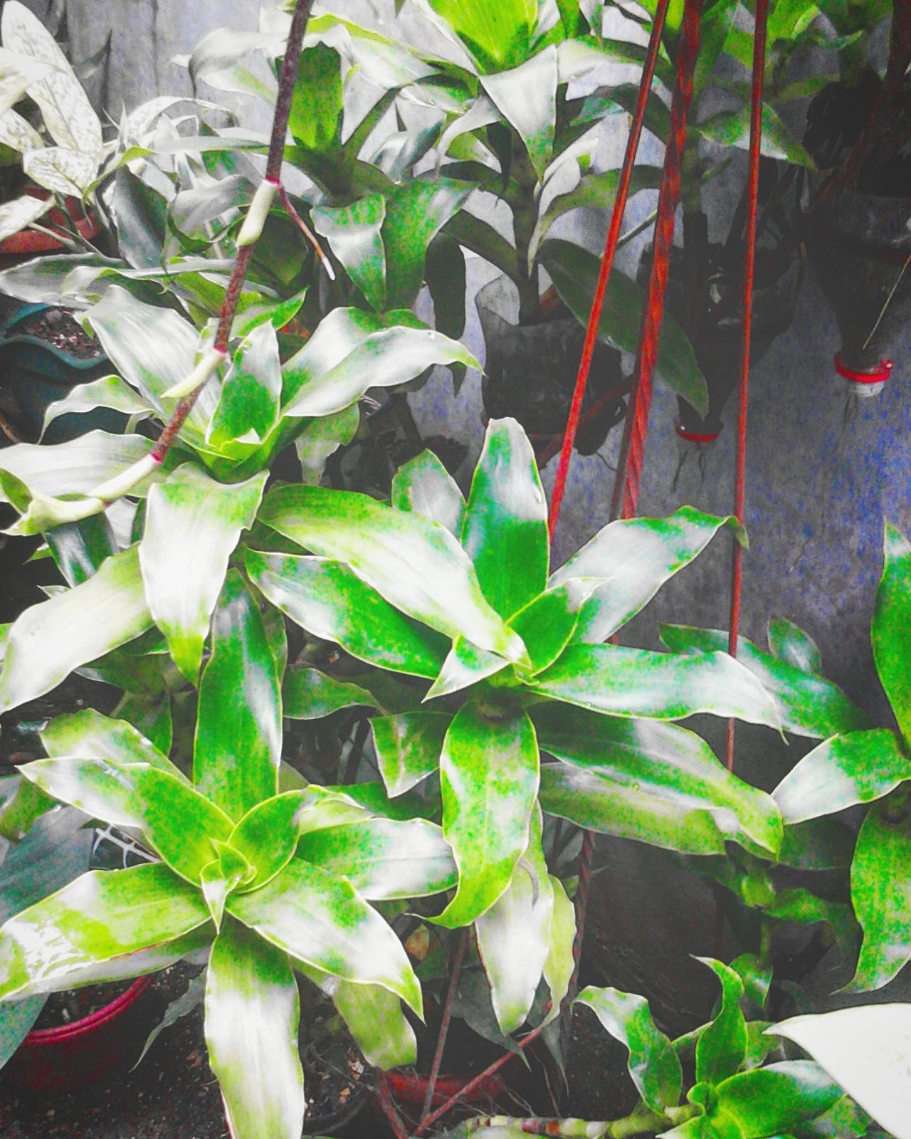 Leaf Growth Plant Nature Green Color Close-up No People Day Outdoors Beauty In Nature Freshness