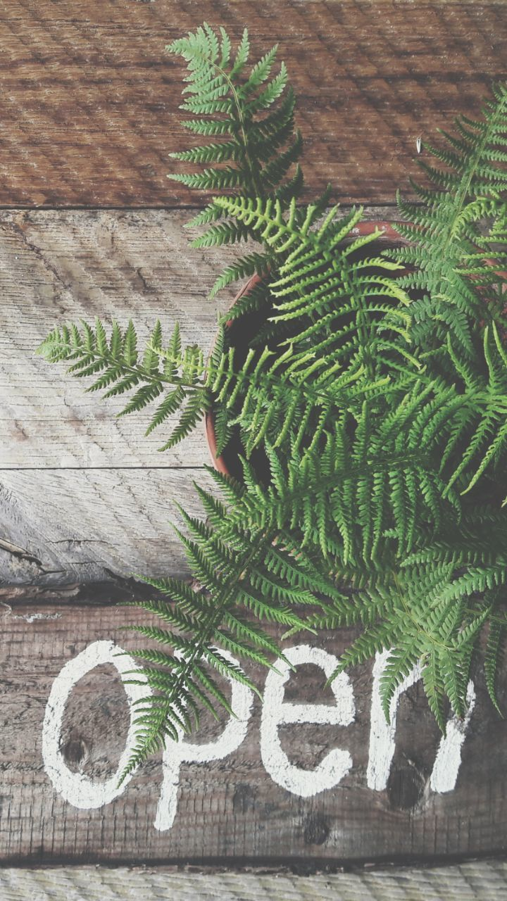 growth, green color, plant, nature, fern, wood - material, no people, day, cactus, high angle view, leaf, indoors, beauty in nature, close-up, tree