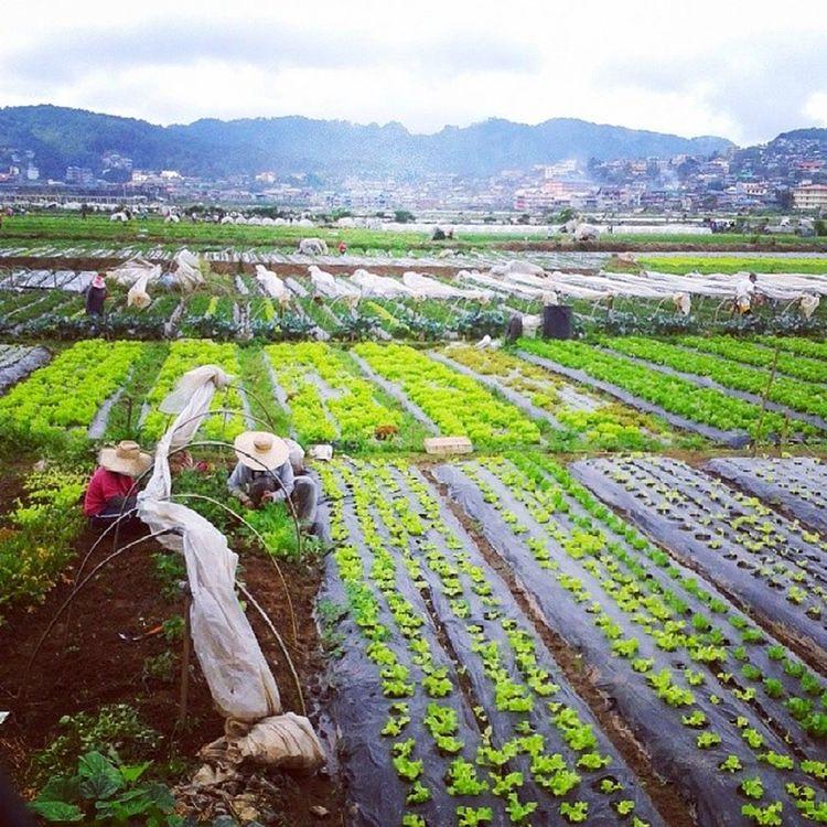 Strawberry fields la trinidad Baguio city