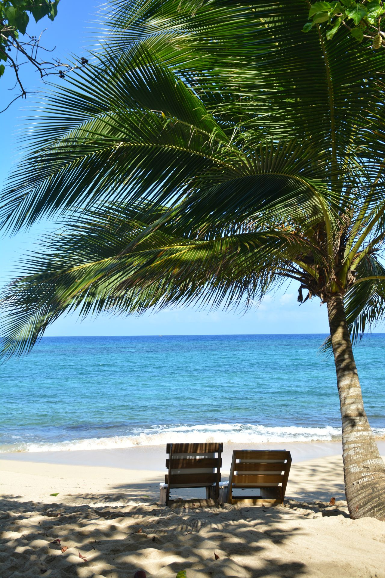 Sea Beach Tree Water Nature Tranquility Beauty In Nature Blue No People Sky Outdoors Sand Tranquil Scene Scenics Clear Sky Day Horizon Over Water Vacations Palm Tree