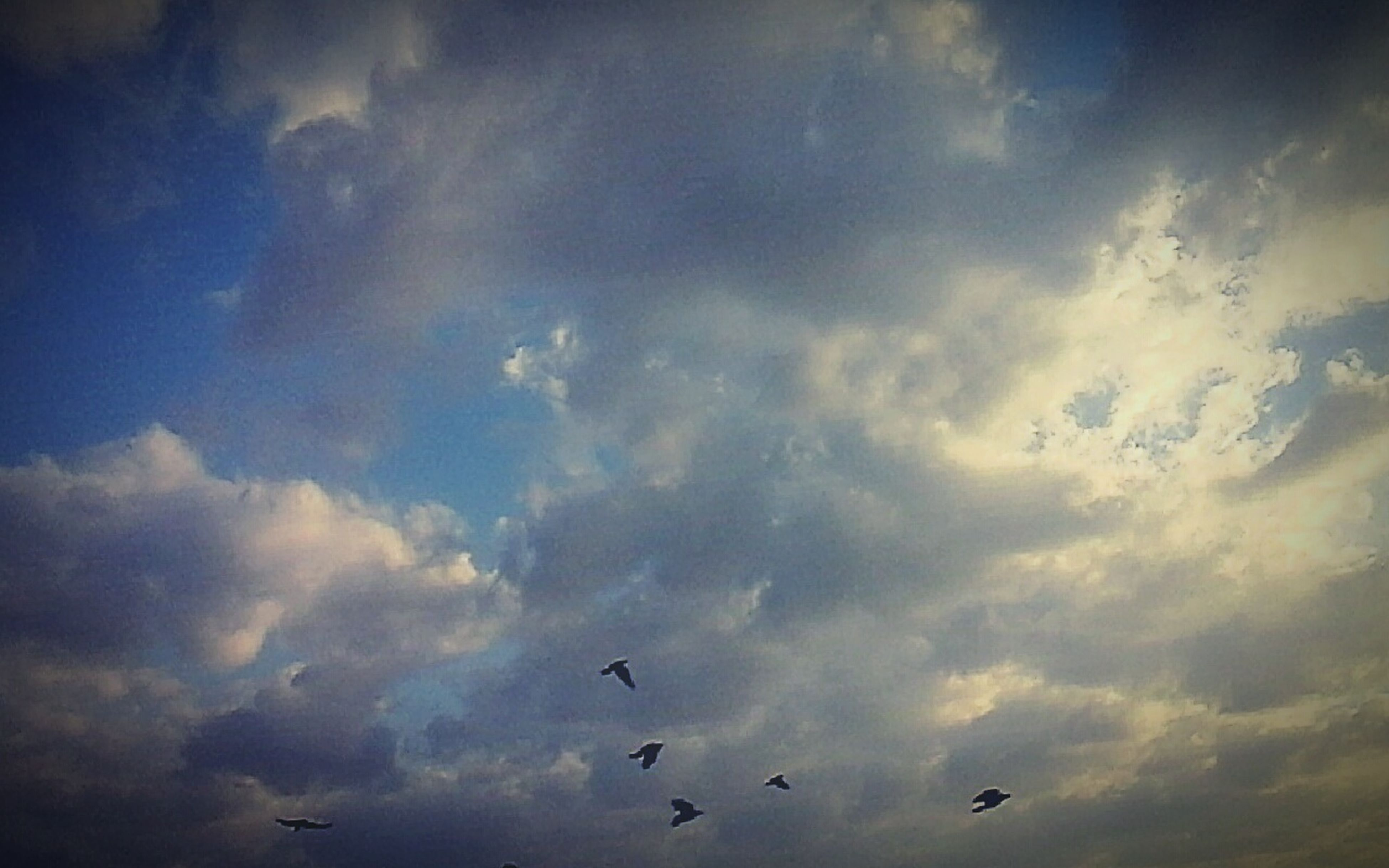 low angle view, sky, bird, flying, animal themes, cloud - sky, animals in the wild, wildlife, beauty in nature, nature, cloudy, cloud, tranquility, blue, scenics, silhouette, outdoors, no people, tranquil scene