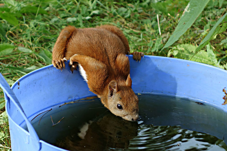A Squirrel A Squirrel Drinking Animal Themes Animal Wildlife Animals In The Wild Close-up No People One Animal Outdoors Water