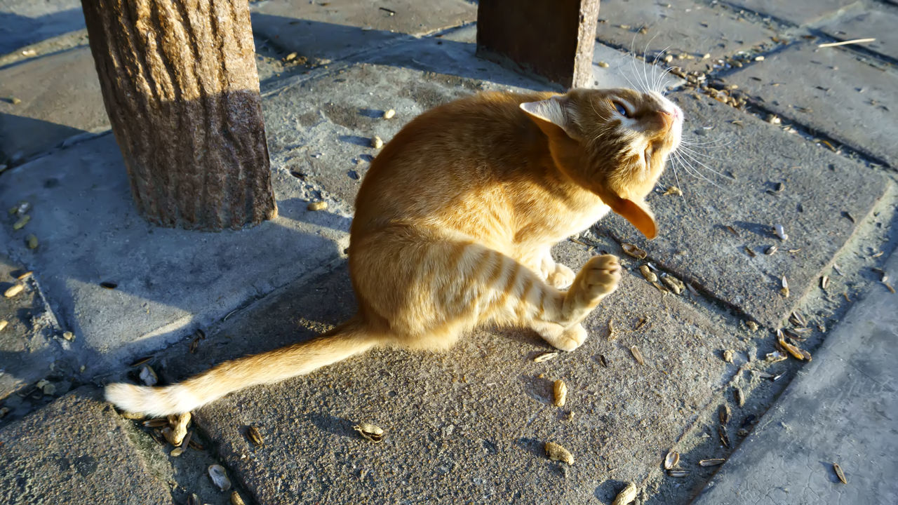 Cat Lovers Animal Themes Nacture_photography Streetcats Morning Light