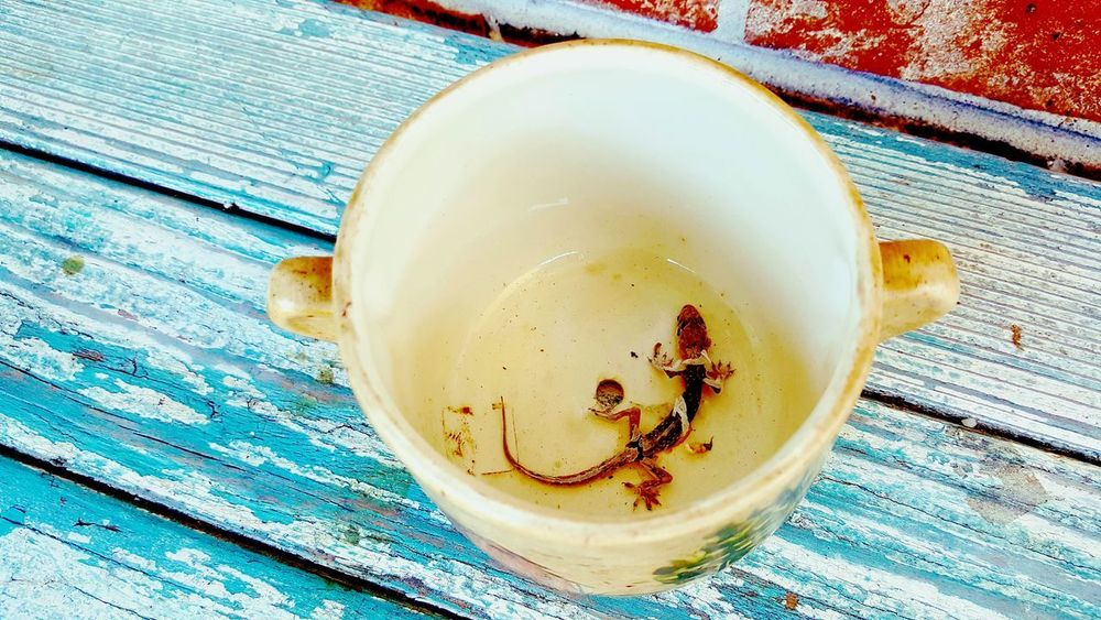 Cup O Lizar Close-up Day Drink Food And Drink Freshness Gecko Joe Healthy Eating Heck Clizrd Sheddi Indoors  Lagniappe Leftovers Lizard Sheddinghisskin No People Table Wood - Material