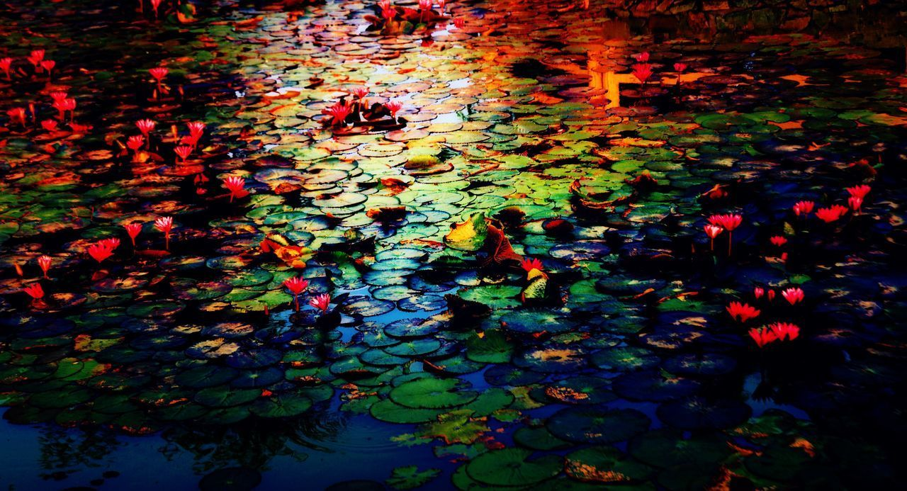 Leaf Autumn Change Pond Leaves Nature Floating On Water Water Beauty In Nature Water Lily Abundance Lily Pad Reflection Growth Maple Leaf Floating Outdoors Plant Day Maple The Great Outdoors - 2017 EyeEm Awards