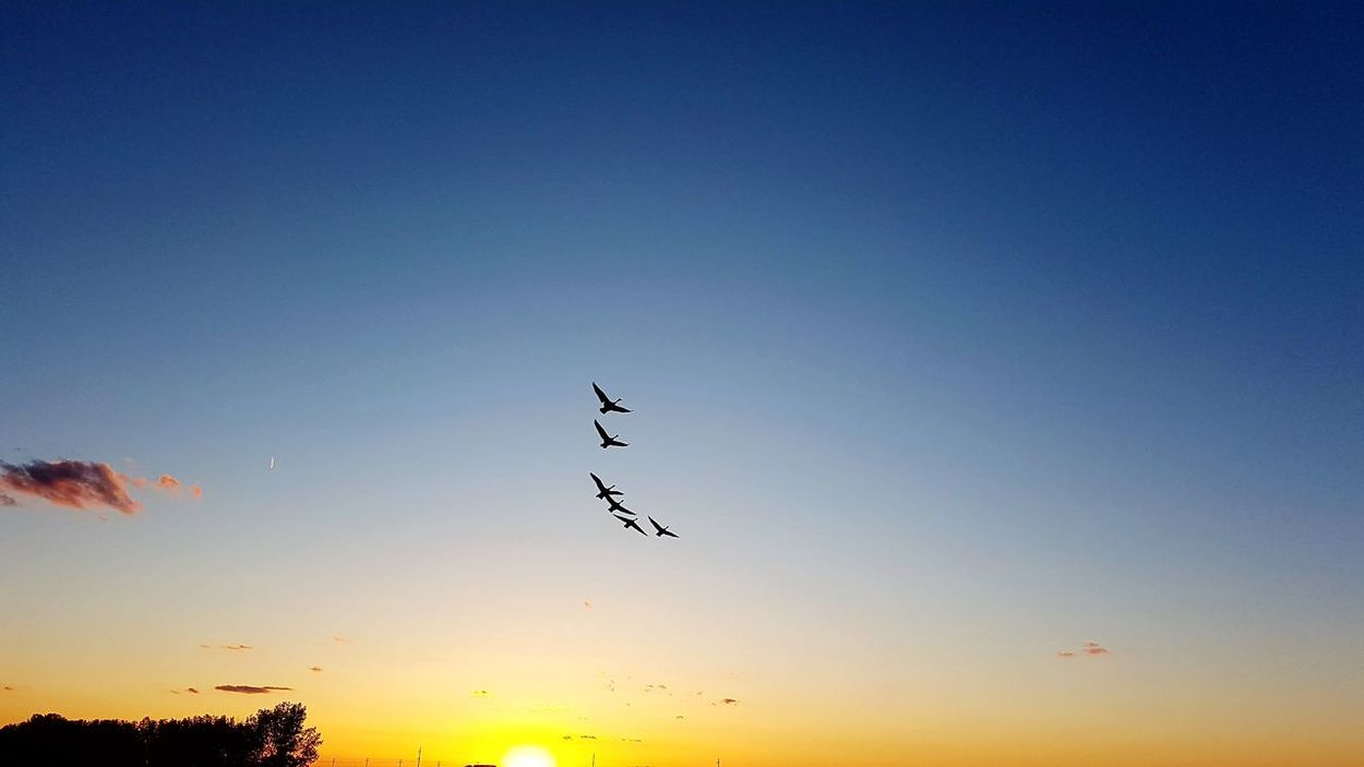 EyeEmNewHere Flying Bird Sunset Animal Wildlife Silhouette Animals In The Wild Mid-air Sky No People Animal Themes Outdoors Beauty In Nature Nature Day First Eyeem Photo Samsung Galaxy S7 Edge