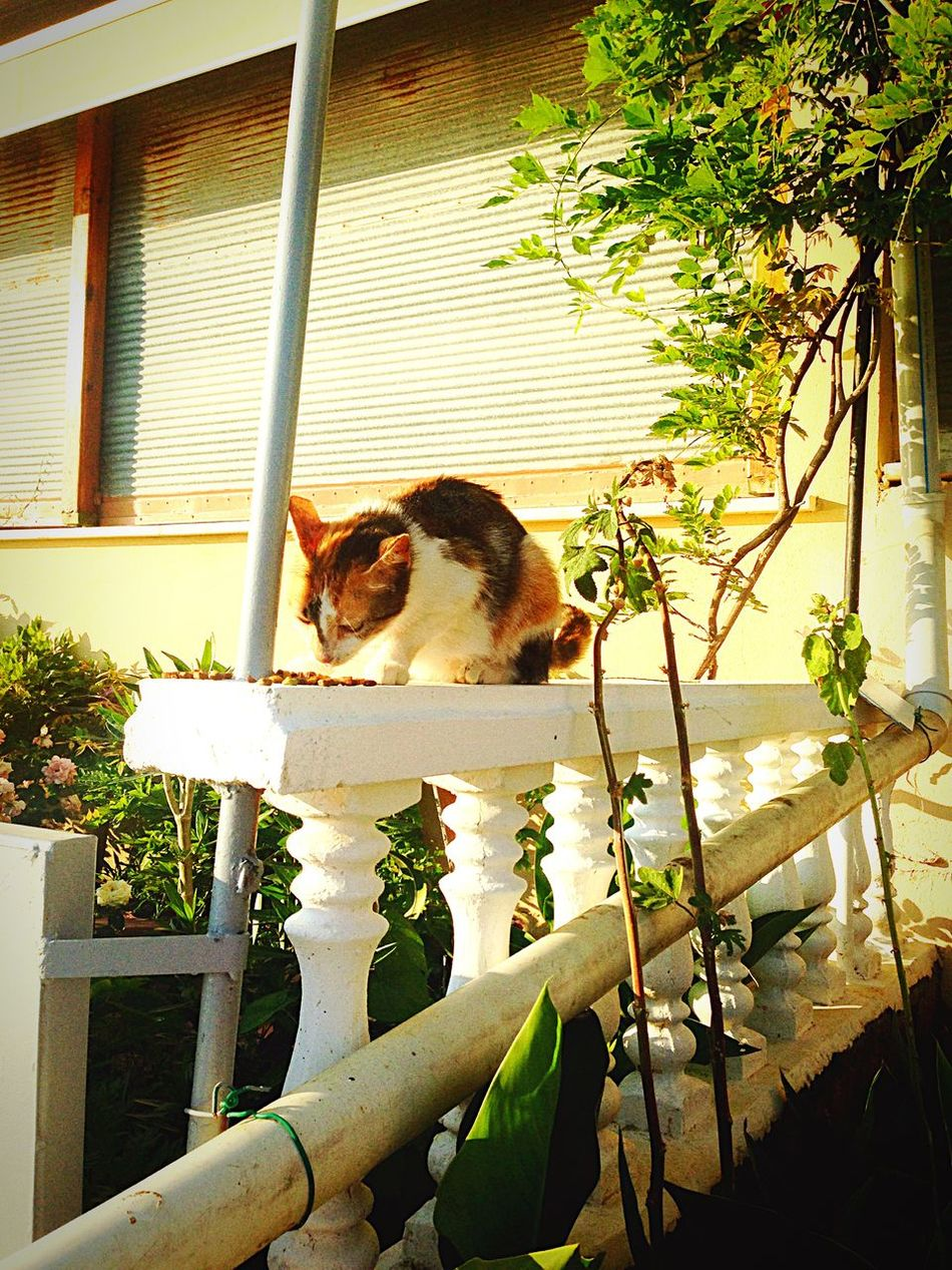 Enjoying The Sun Relaxing Weekend Hello World Enjoying Life Beautiful Day Cat♡