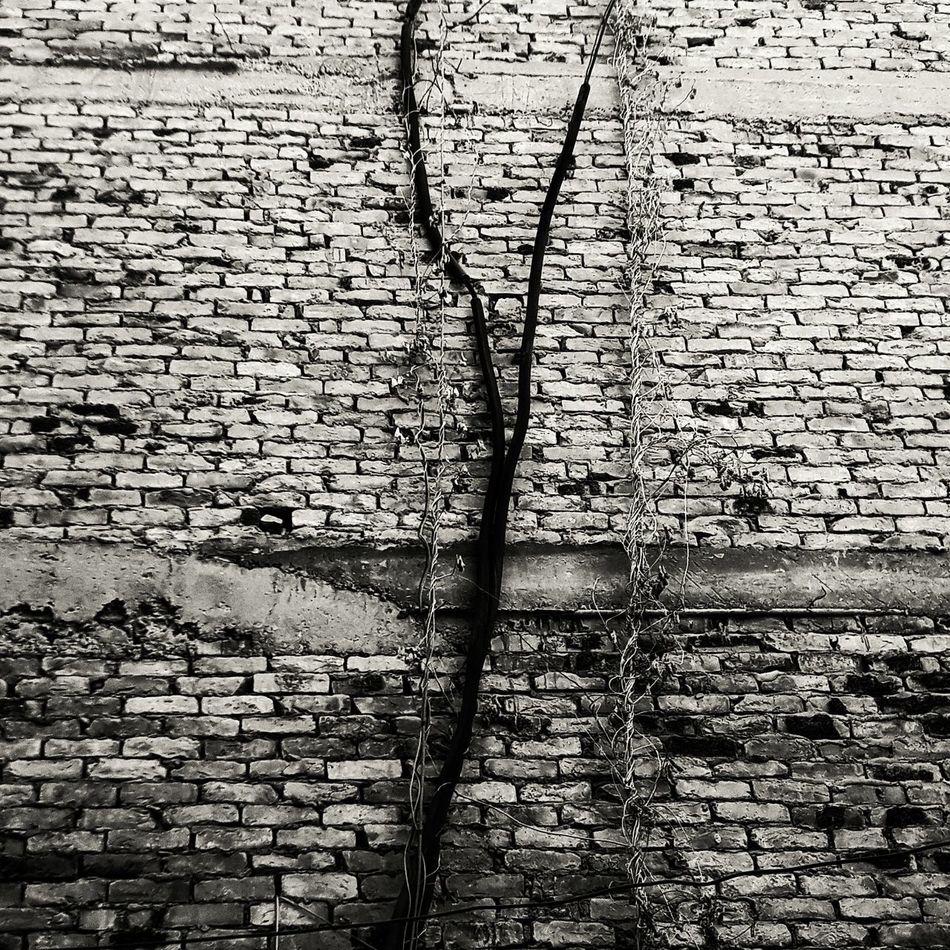 Wall Creaper Plant Climbing Bricks Natural