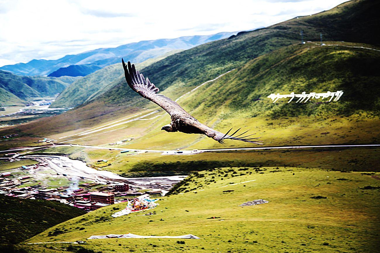 佛教 宗教 色达 风光 摄影 First Eyeem Photo 动物 鹰